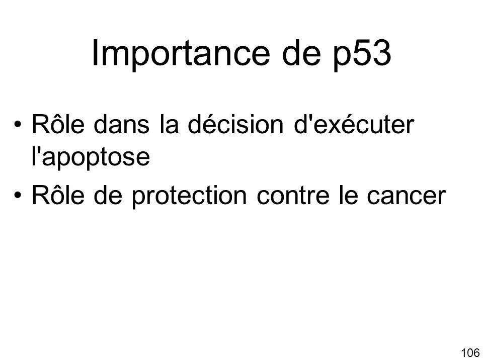 Importance de p53 Rôle dans la décision d exécuter l apoptose