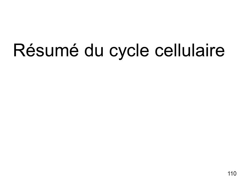 Résumé du cycle cellulaire