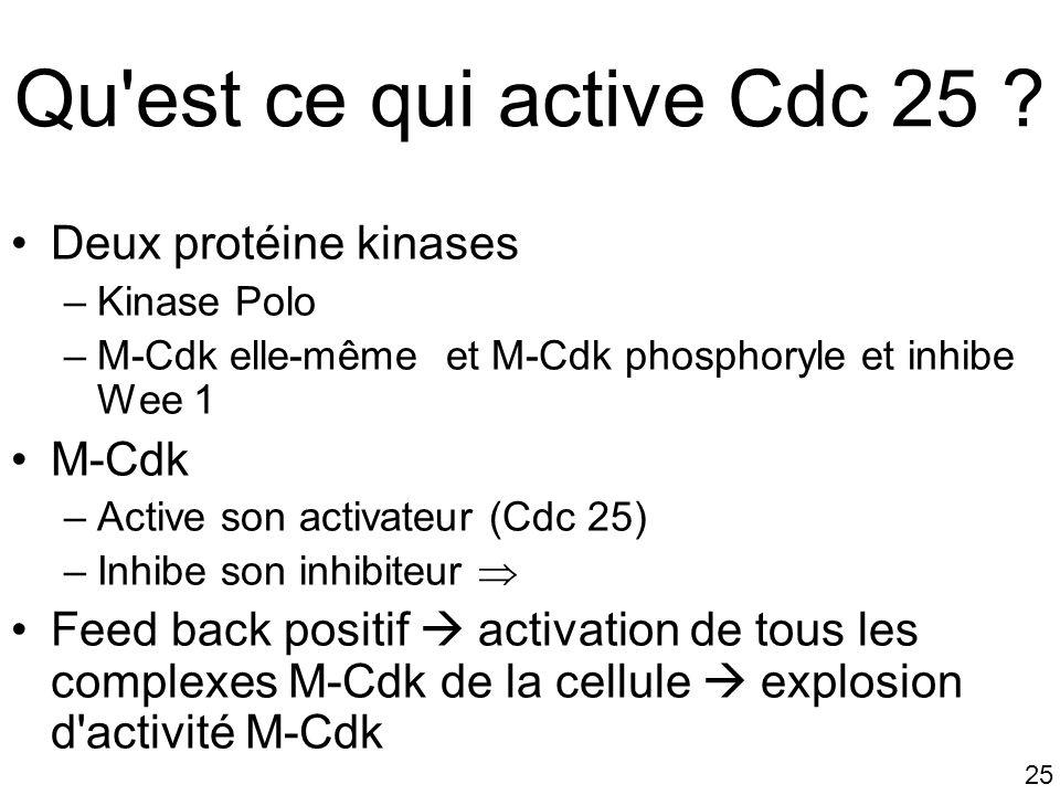 Qu est ce qui active Cdc 25 Deux protéine kinases M-Cdk