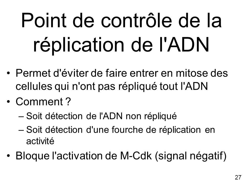 Point de contrôle de la réplication de l ADN