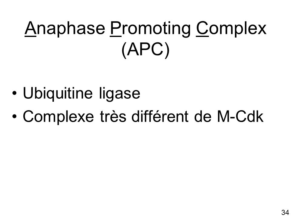 Anaphase Promoting Complex (APC)