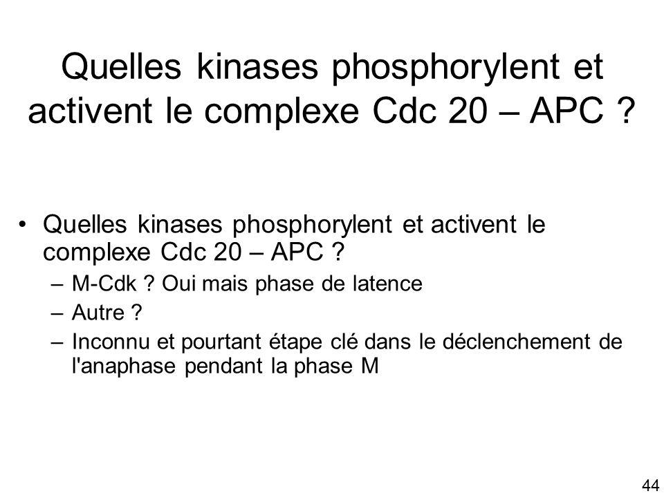 Quelles kinases phosphorylent et activent le complexe Cdc 20 – APC
