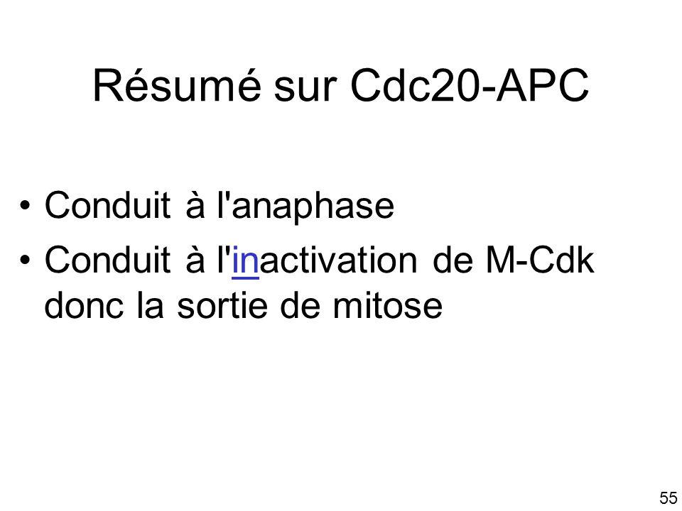 Résumé sur Cdc20-APC Conduit à l anaphase