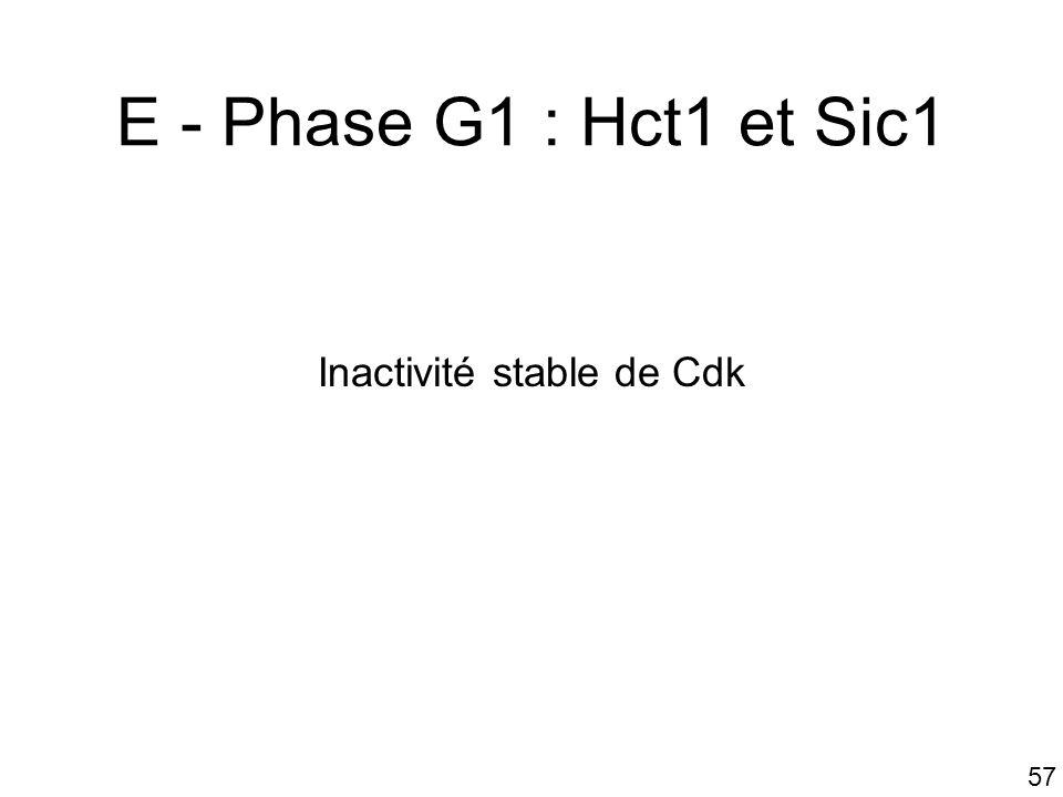 Inactivité stable de Cdk