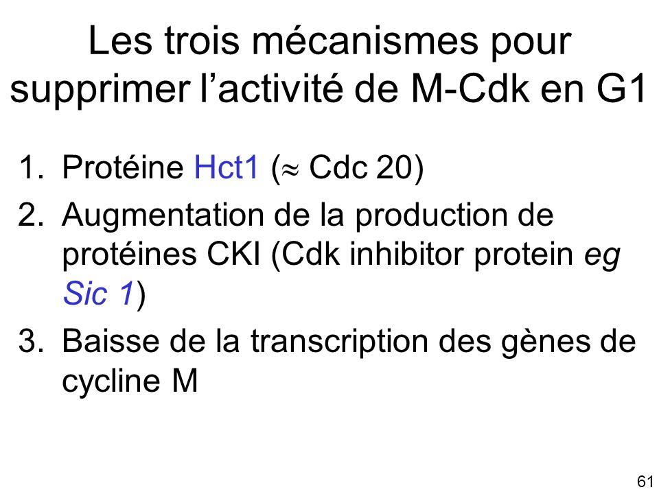 Les trois mécanismes pour supprimer l'activité de M-Cdk en G1