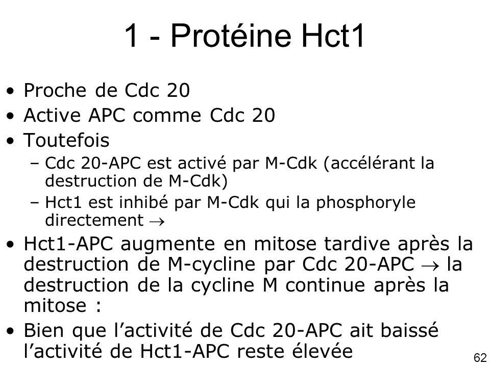 1 - Protéine Hct1 Proche de Cdc 20 Active APC comme Cdc 20 Toutefois