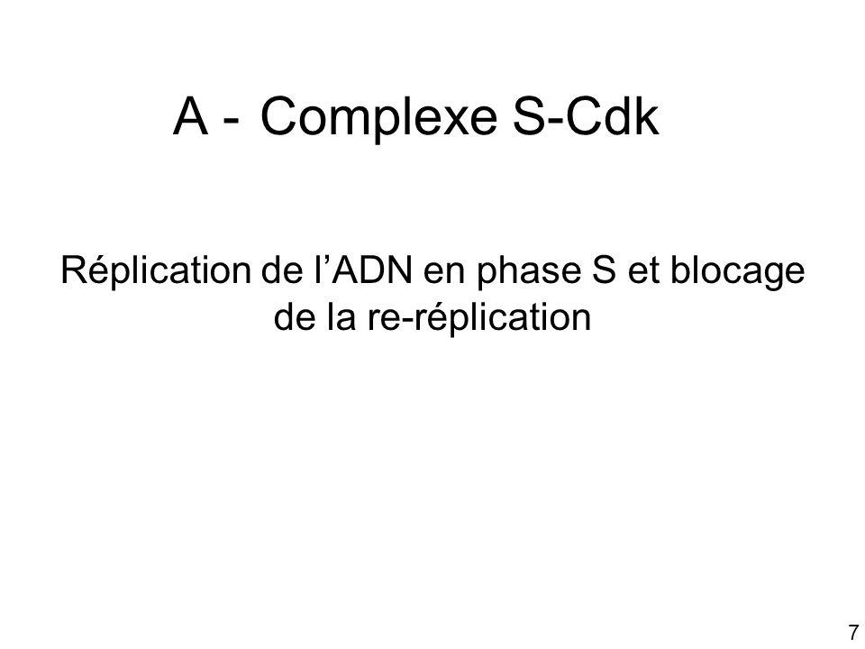 Réplication de l'ADN en phase S et blocage de la re-réplication
