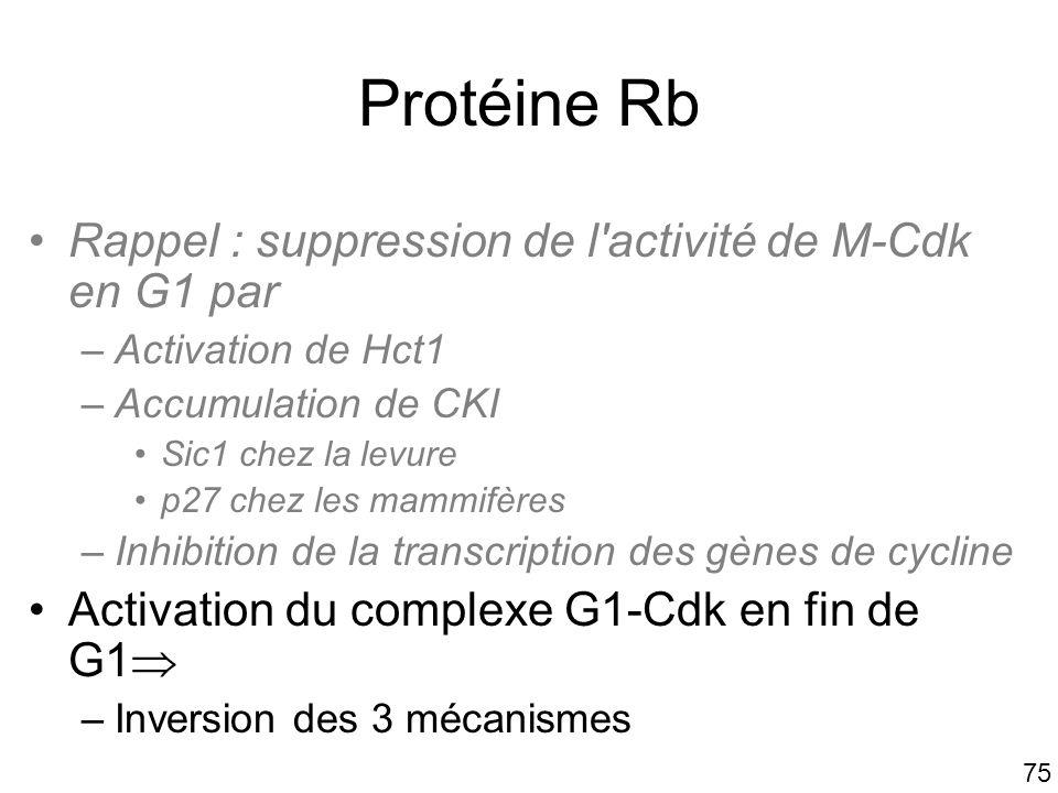 Protéine Rb Rappel : suppression de l activité de M-Cdk en G1 par