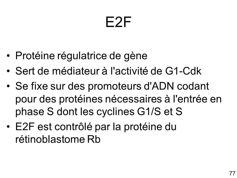 E2F Protéine régulatrice de gène