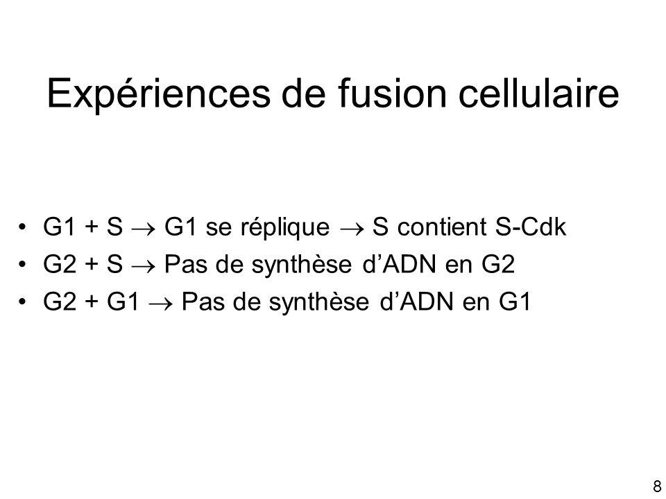 Expériences de fusion cellulaire
