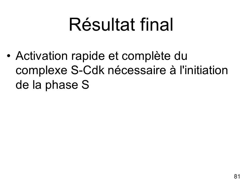 Mardi 23 janvier 2006 Résultat final. Activation rapide et complète du complexe S-Cdk nécessaire à l initiation de la phase S.