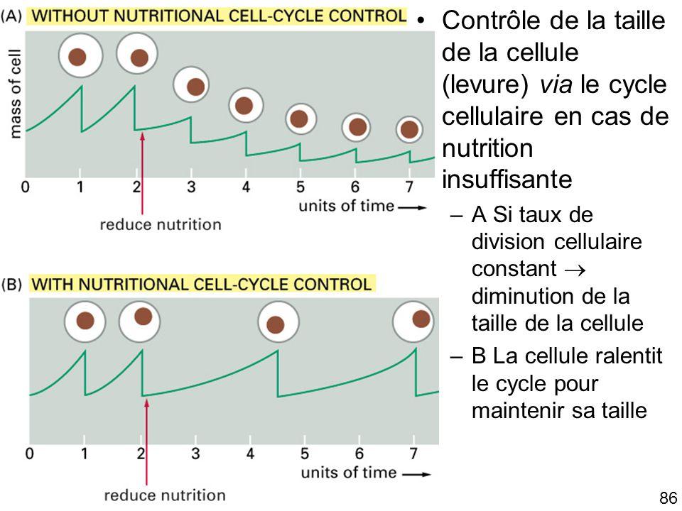 Mardi 23 janvier 2006 Contrôle de la taille de la cellule (levure) via le cycle cellulaire en cas de nutrition insuffisante.
