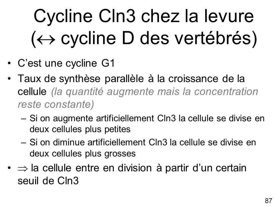 Cycline Cln3 chez la levure ( cycline D des vertébrés)