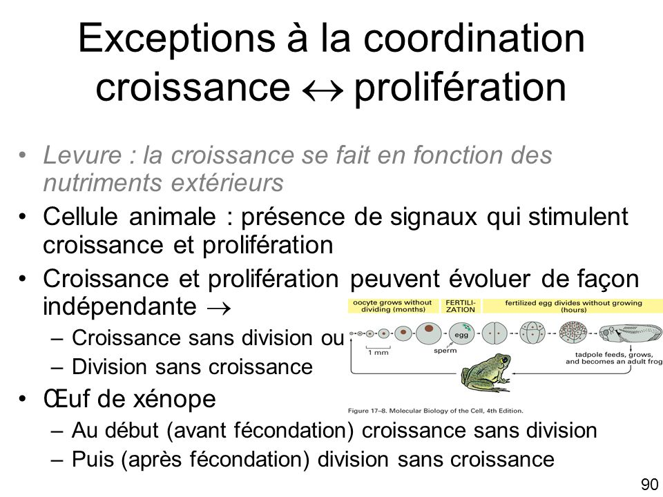 Exceptions à la coordination croissance  prolifération