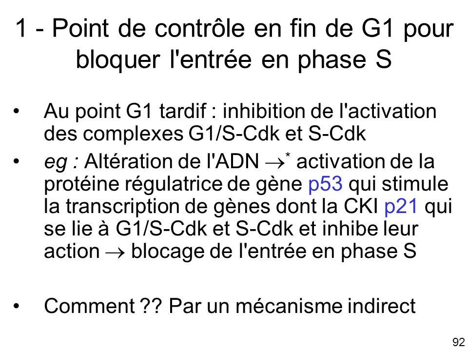 1 - Point de contrôle en fin de G1 pour bloquer l entrée en phase S