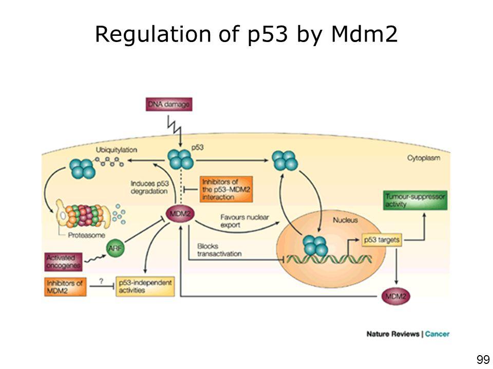 Chene,P2003p102 Nat Rev Cancer Regulation of p53 by Mdm2