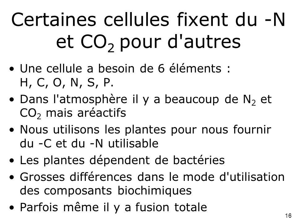 Certaines cellules fixent du -N et CO2 pour d autres