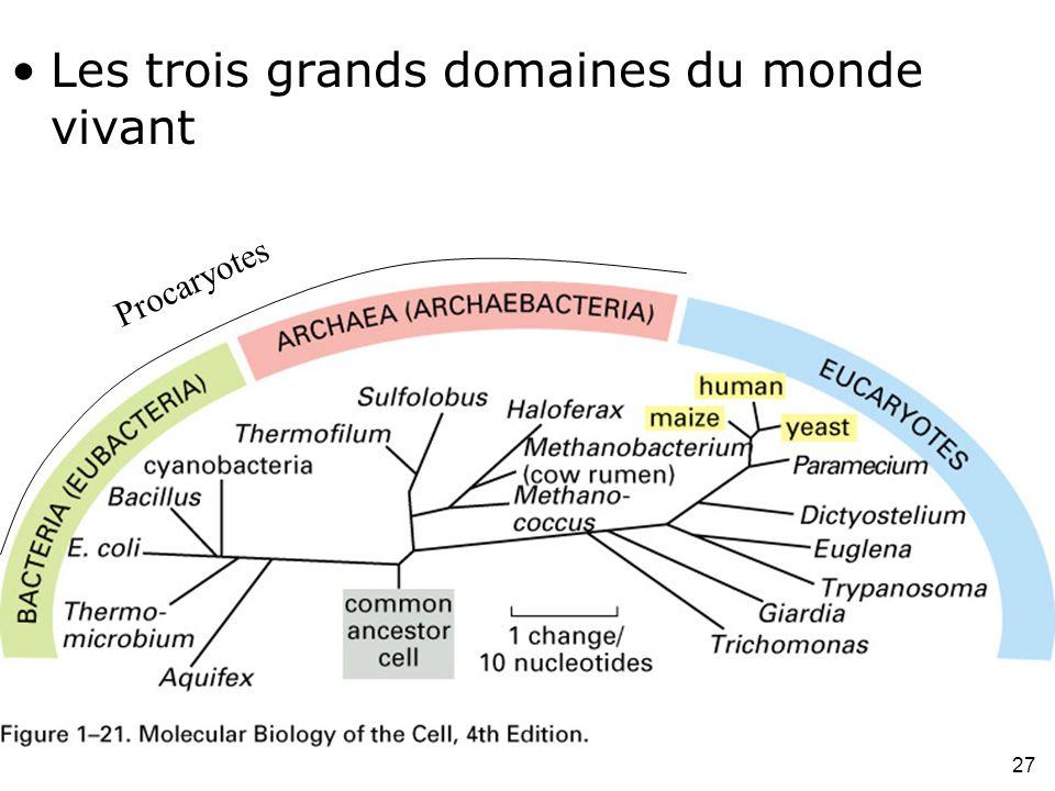 Fig 1-21 Les trois grands domaines du monde vivant #3p18 Procaryotes