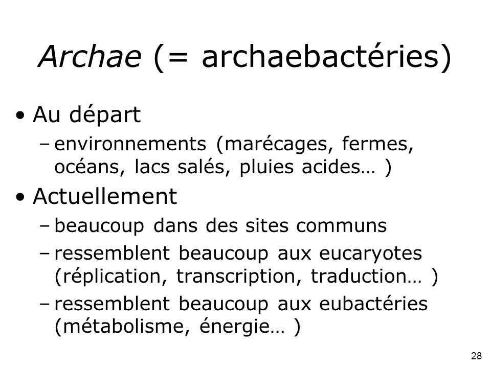 Archae (= archaebactéries)