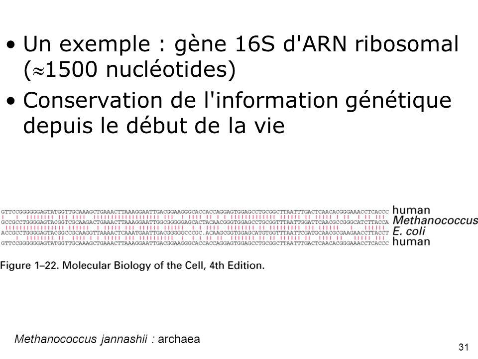 Methanococcus jannashii : archaea