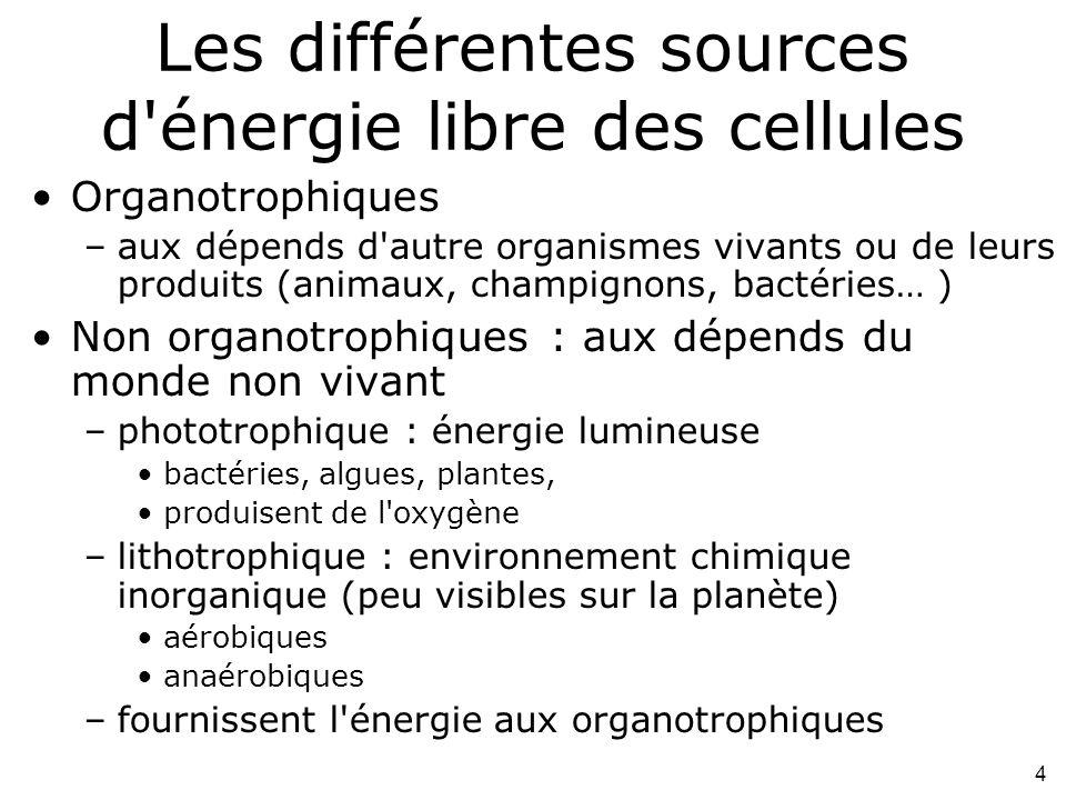 Les différentes sources d énergie libre des cellules