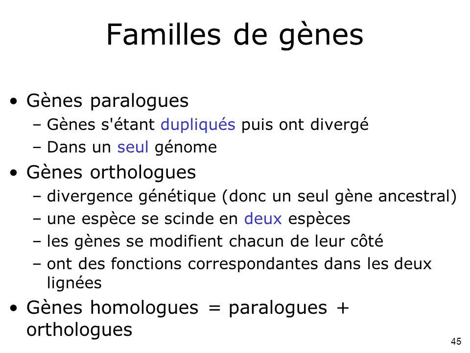 Familles de gènes Gènes paralogues Gènes orthologues