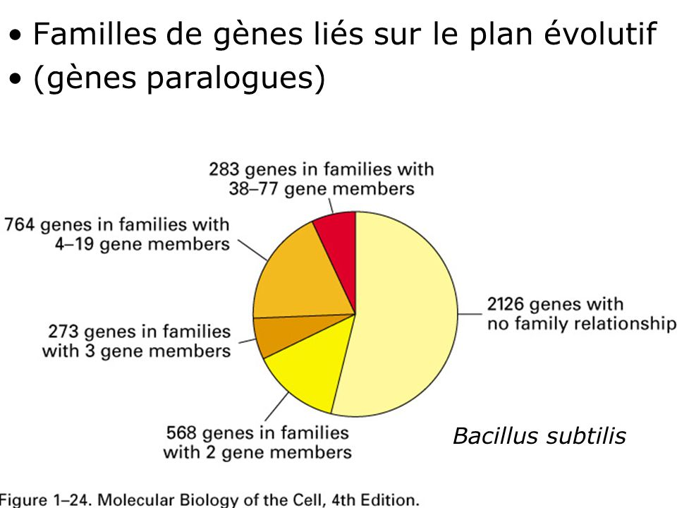Fig 1-24 Familles de gènes liés sur le plan évolutif
