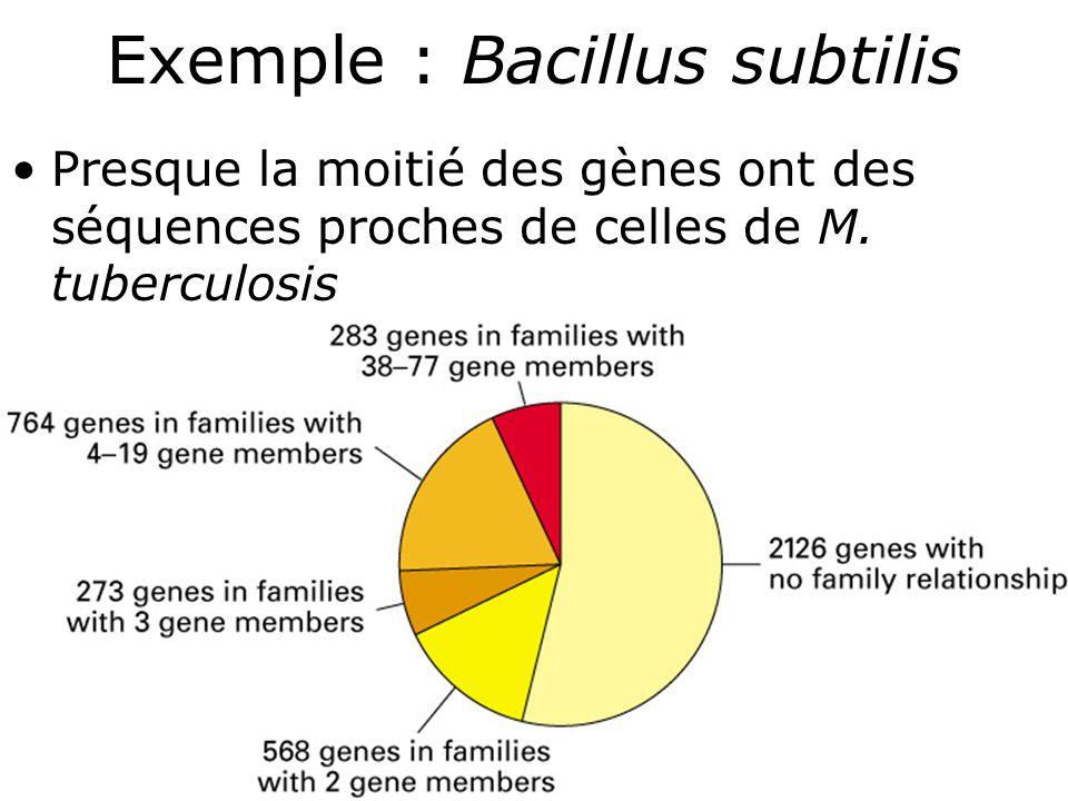 Exemple : Bacillus subtilis