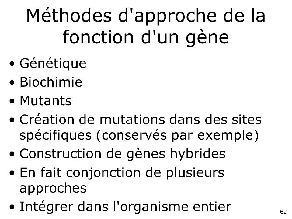 Méthodes d approche de la fonction d un gène
