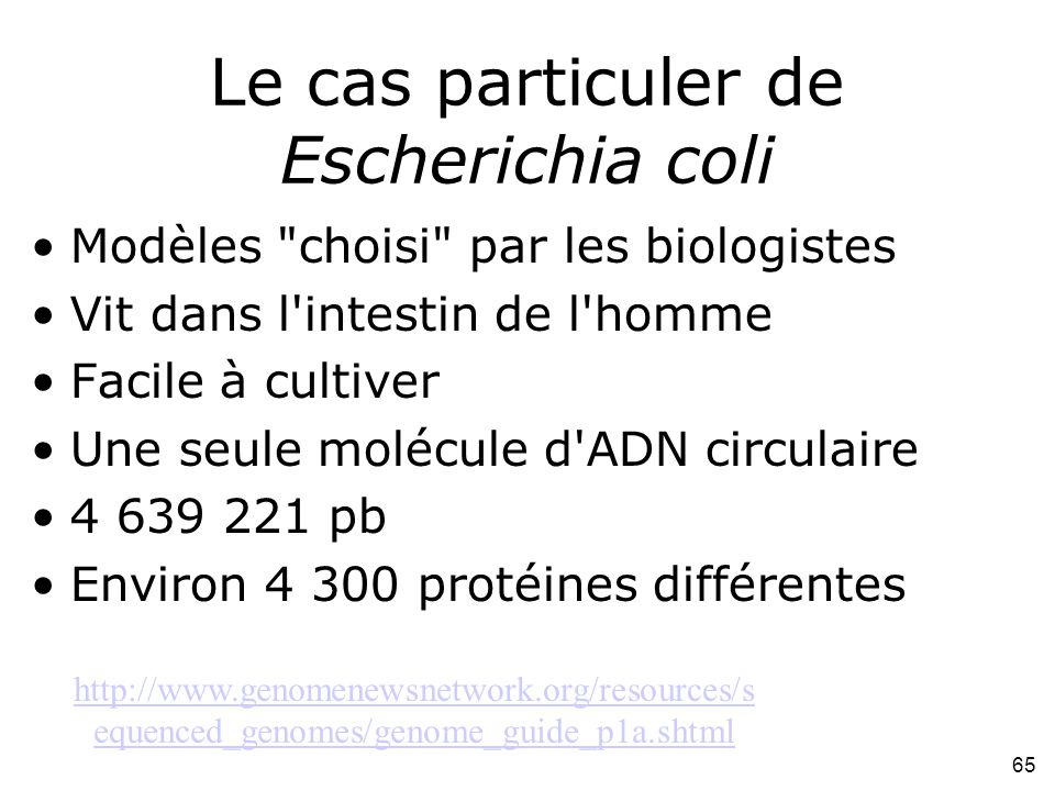 Le cas particuler de Escherichia coli