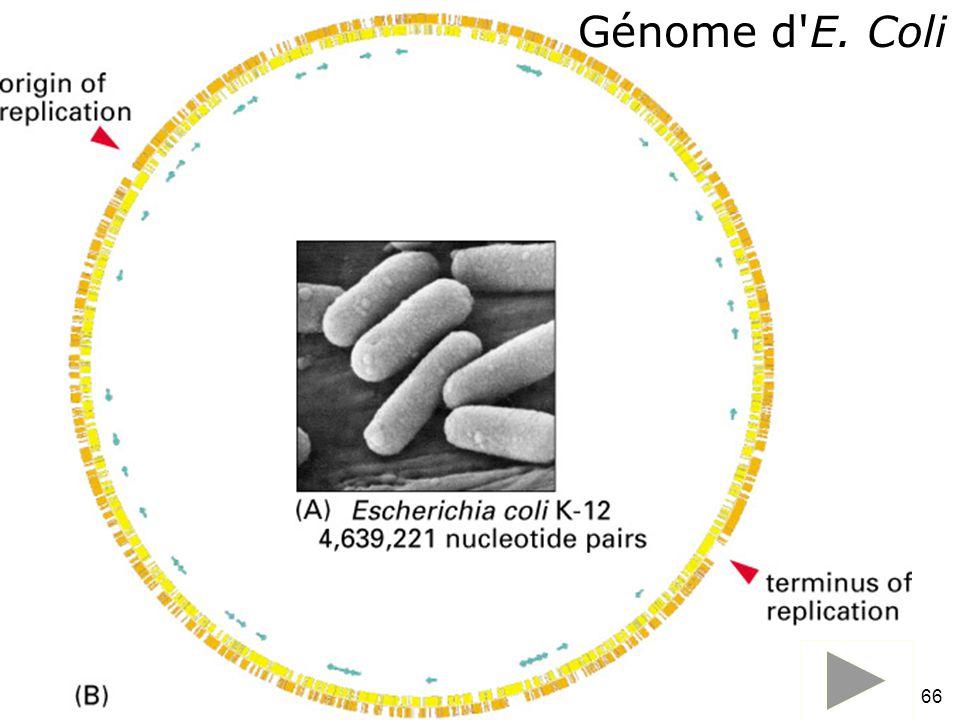 Lundi 9 octobre 2006 Génome d E. Coli Fig 1-30