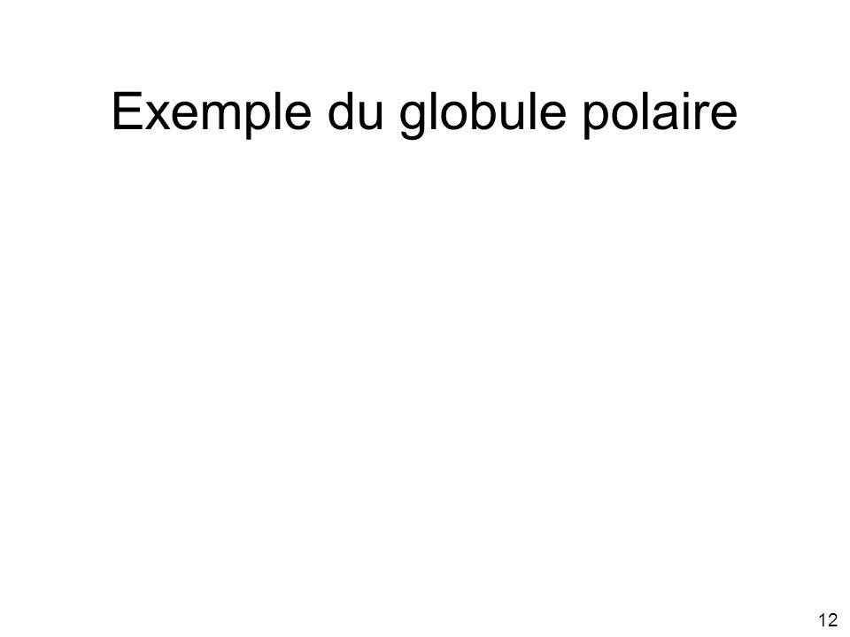 Exemple du globule polaire