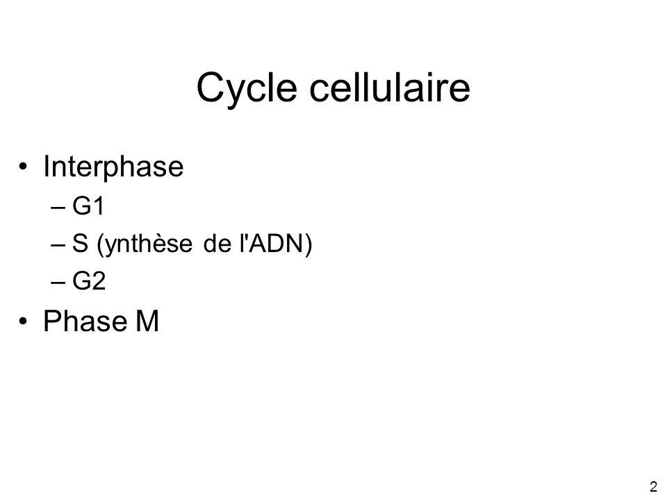 Cycle cellulaire Interphase G1 S (ynthèse de l ADN) G2 Phase M