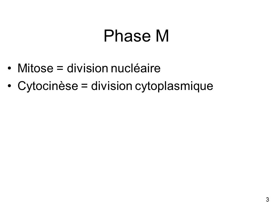 Phase M Mitose = division nucléaire