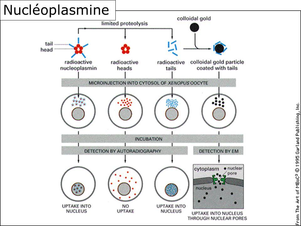 Nucléoplasmine Fig 12-14 3ème édition