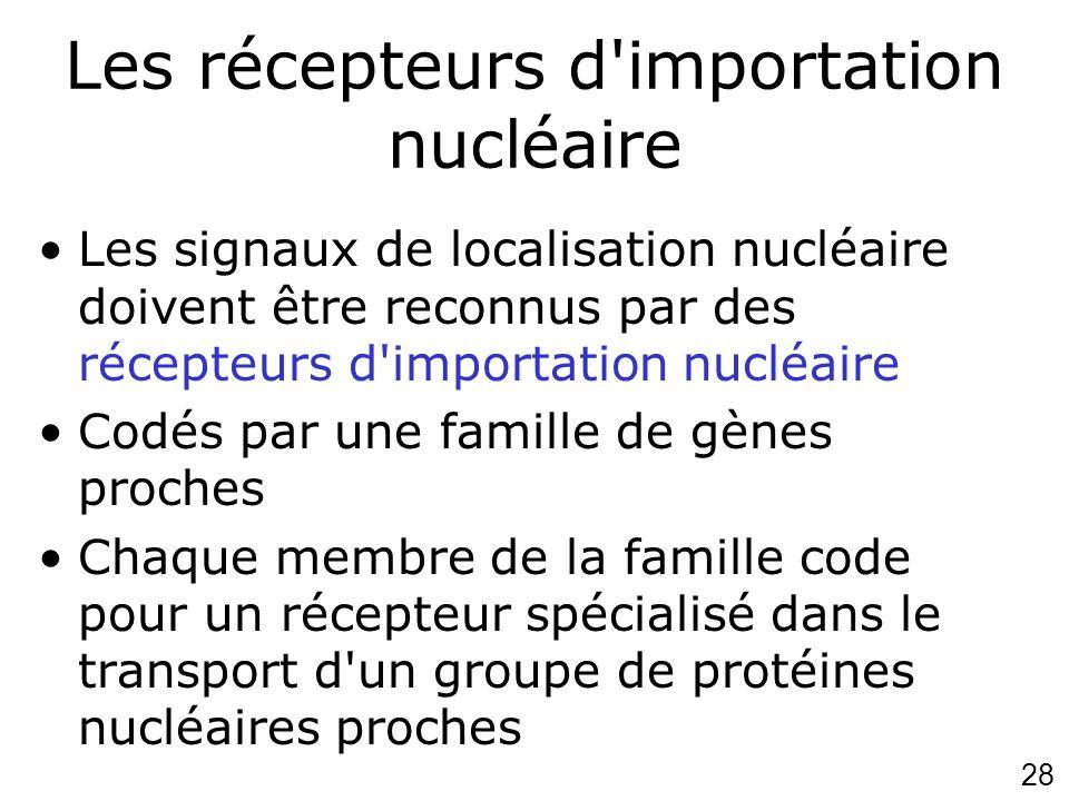 Les récepteurs d importation nucléaire