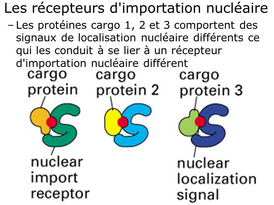 Fig 12-14A Les récepteurs d importation nucléaire