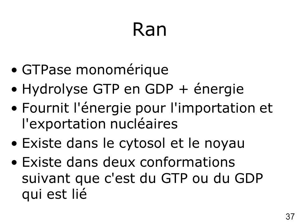 Ran GTPase monomérique Hydrolyse GTP en GDP + énergie