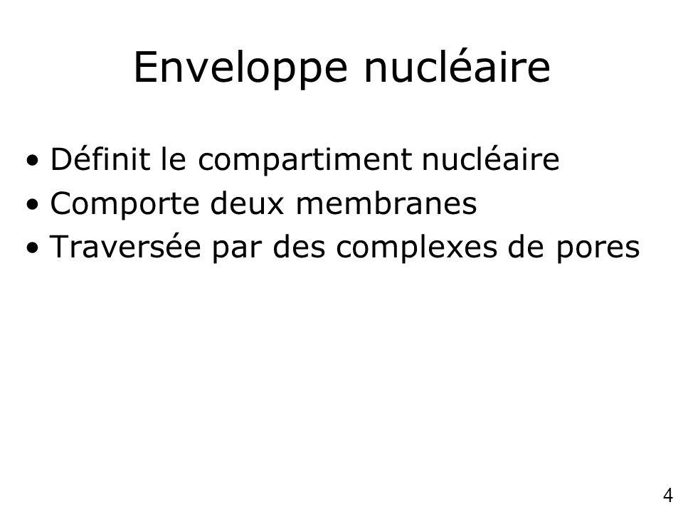 Enveloppe nucléaire Définit le compartiment nucléaire