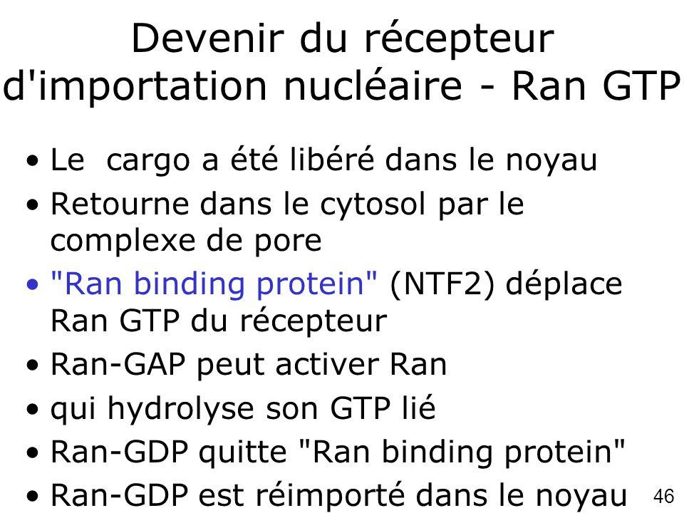 Devenir du récepteur d importation nucléaire - Ran GTP