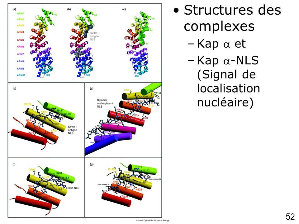 Chook,YM2001p703 (fig2) Structures des complexes Kap  et