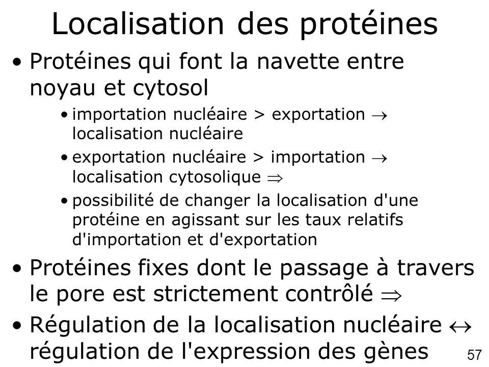 Localisation des protéines