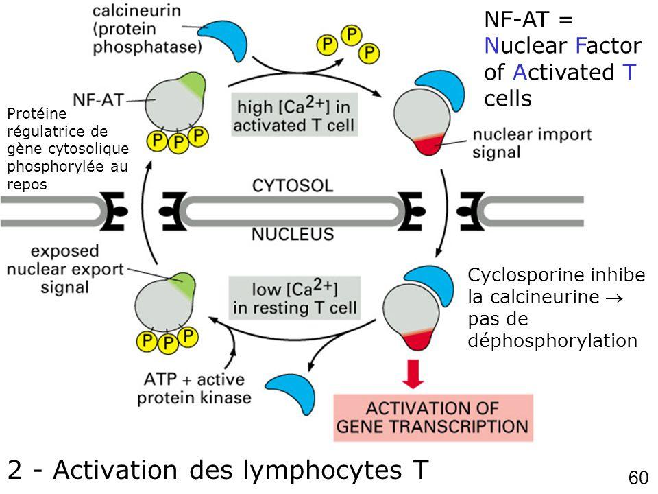 Fig 12-19 2 - Activation des lymphocytes T