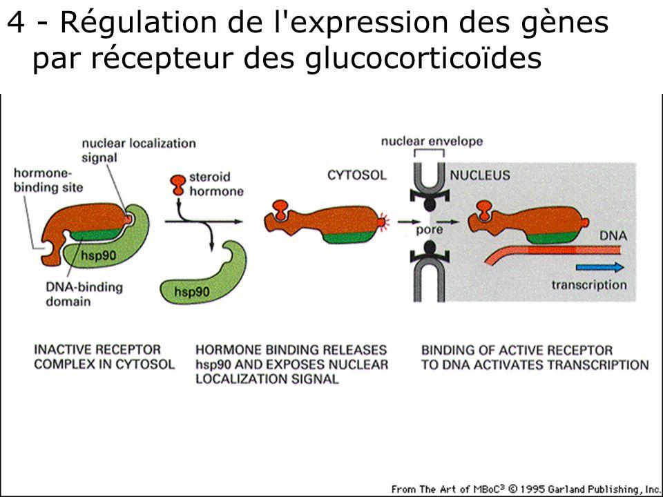 4 - Régulation de l expression des gènes par récepteur des glucocorticoïdes