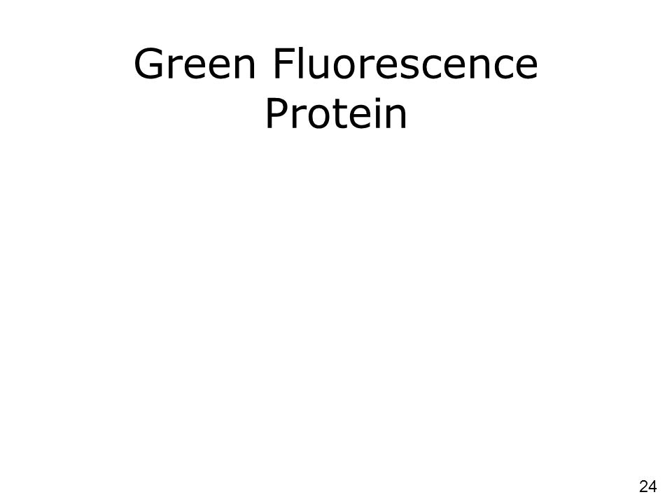 Green Fluorescence Protein