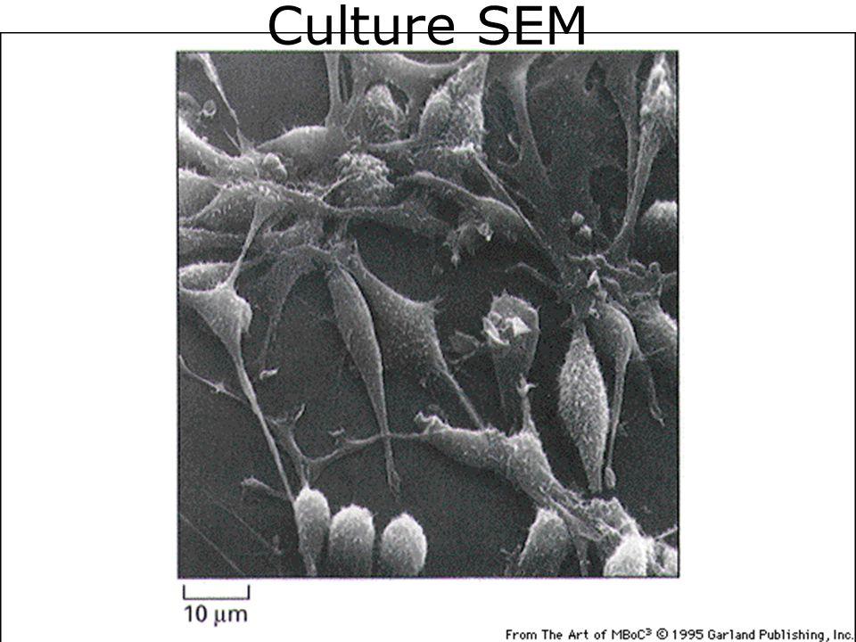 Culture SEM