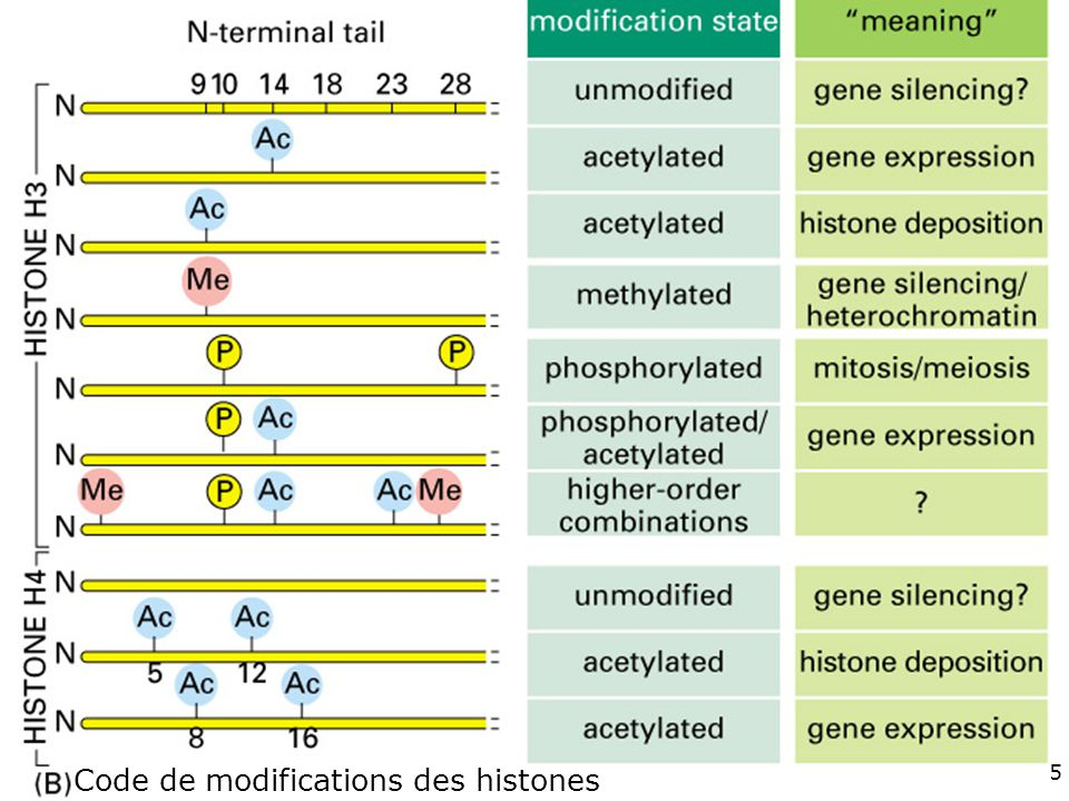 Fig 4-35(B) #13p215 Code de modifications des histones