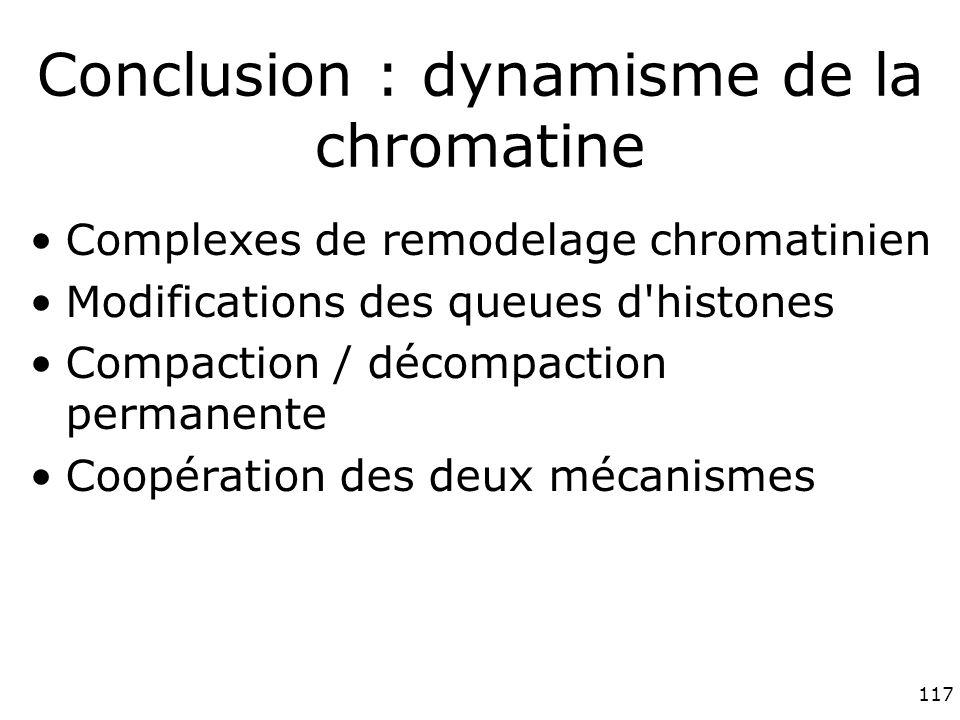Conclusion : dynamisme de la chromatine