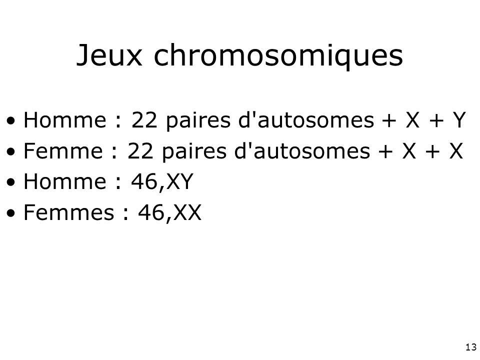 Jeux chromosomiques Homme : 22 paires d autosomes + X + Y