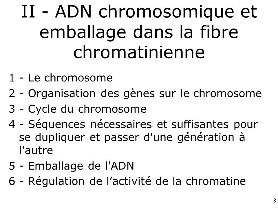 II - ADN chromosomique et emballage dans la fibre chromatinienne